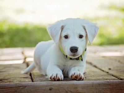 gdzie wyrzucac psie odchody 400x300 - Gdzie wyrzucać psie odchody z posesji ?